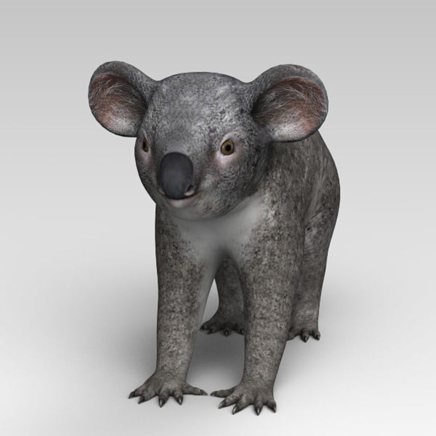 Koala royalty-free 3d model - Preview no. 6