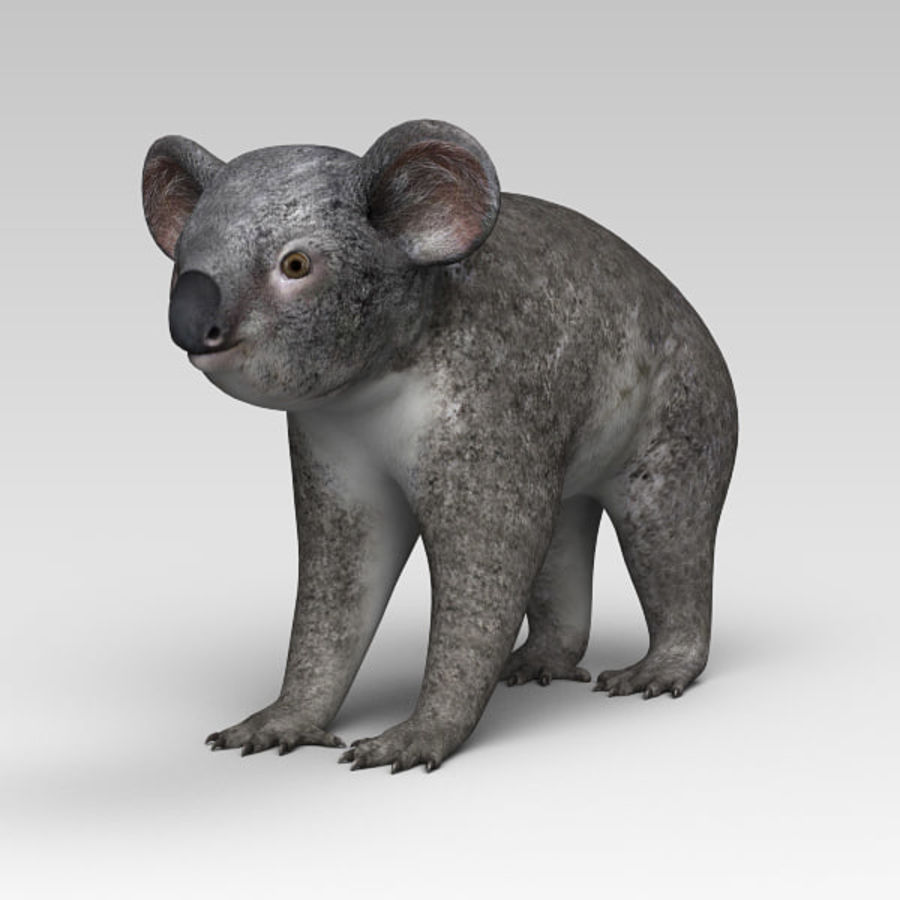 Koala royalty-free 3d model - Preview no. 2