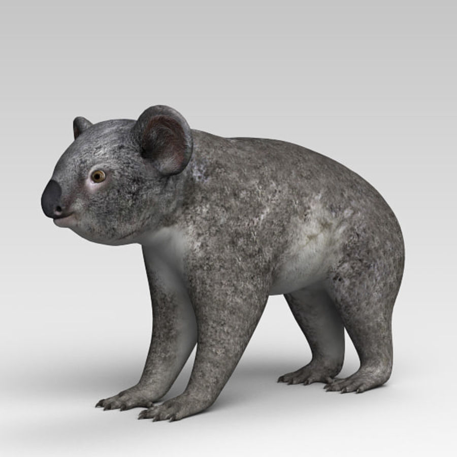 Koala royalty-free 3d model - Preview no. 3