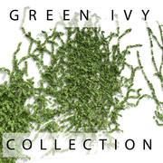墙上的绿色常春藤植物收藏 3d model
