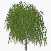 バーチの木 3d model