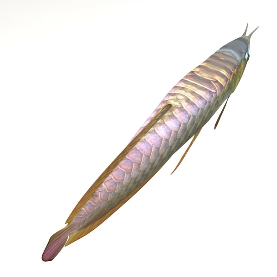 Arowana vis royalty-free 3d model - Preview no. 4