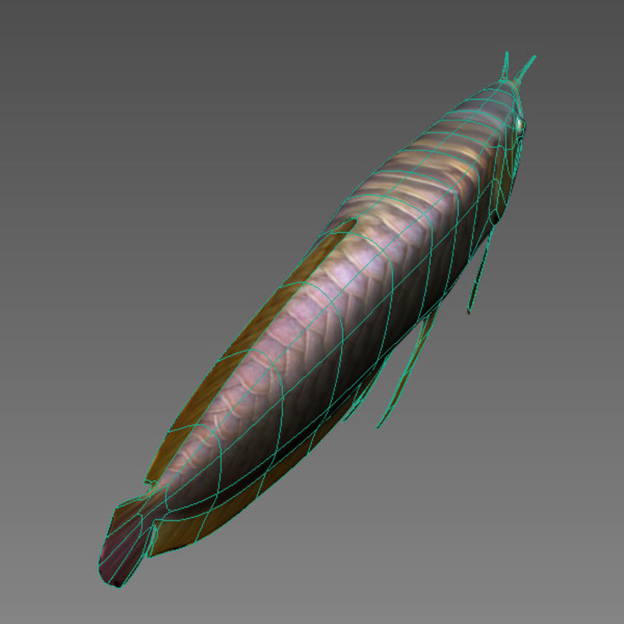 Arowana vis royalty-free 3d model - Preview no. 6