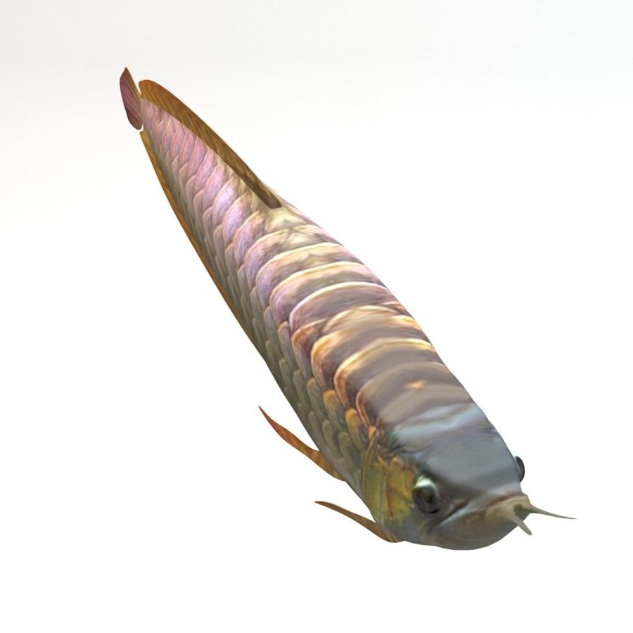 Arowana vis royalty-free 3d model - Preview no. 2