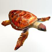 Schildkröte 3d model