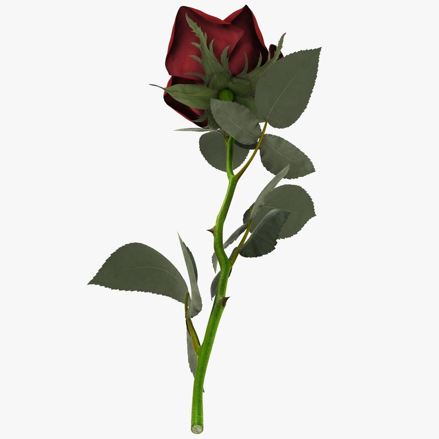 Red Rose royalty-free 3d model - Preview no. 9