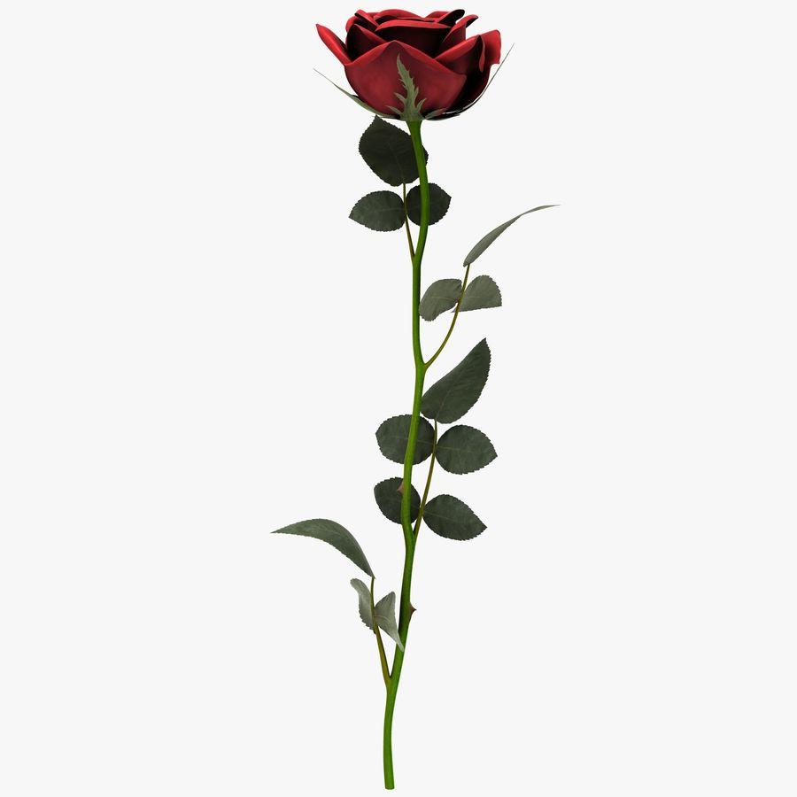 Red Rose royalty-free 3d model - Preview no. 3