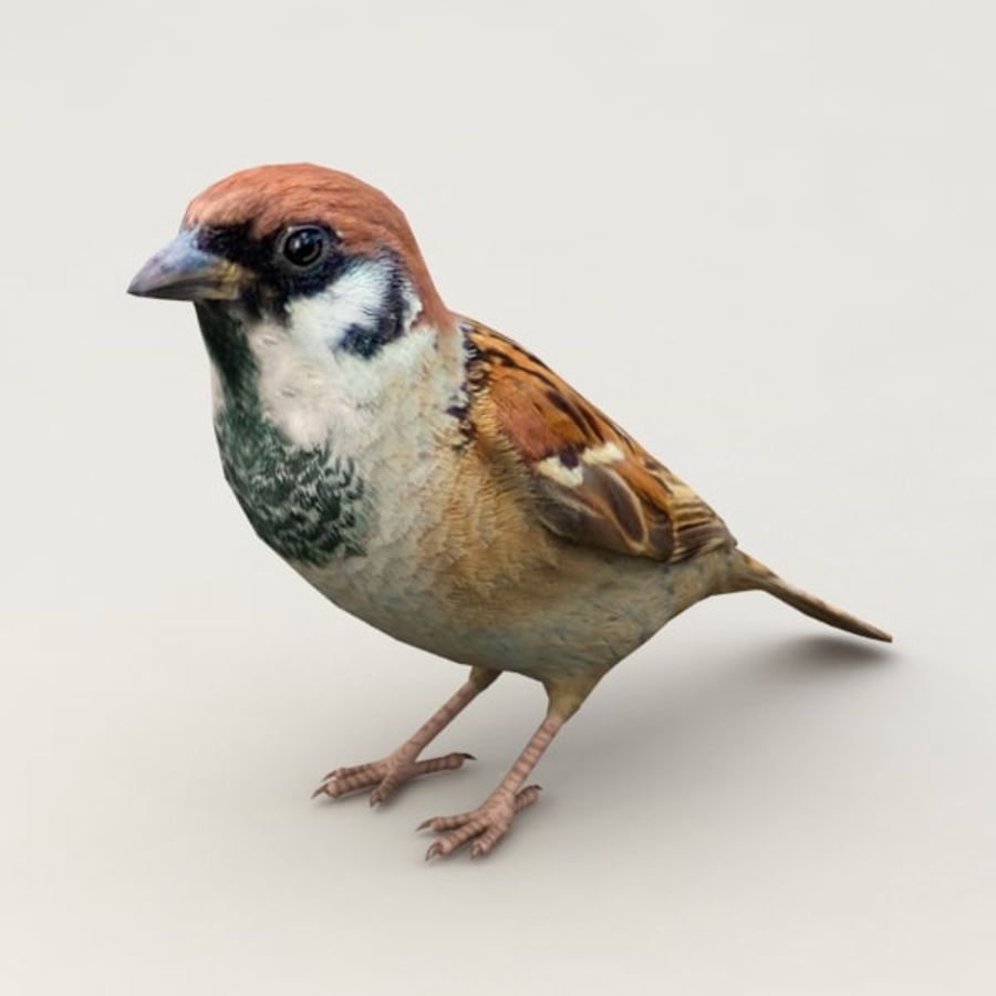 Sparrow Animated royalty-free 3d model - Preview no. 2