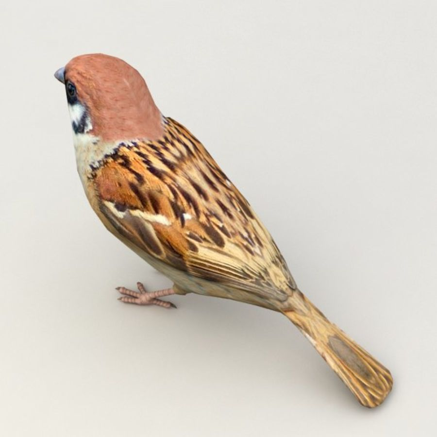 Sparrow Animated royalty-free 3d model - Preview no. 4