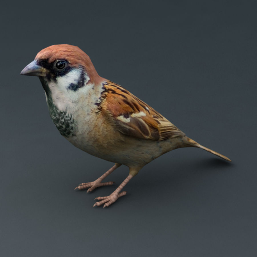 Sparrow Animated royalty-free 3d model - Preview no. 8