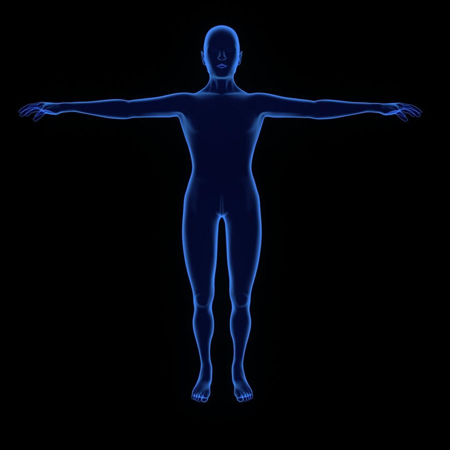 Human Internal Organ Xray royalty-free 3d model - Preview no. 5