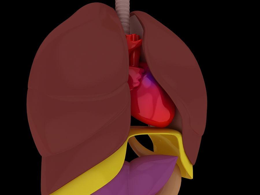 Human Internal Organ Xray royalty-free 3d model - Preview no. 12
