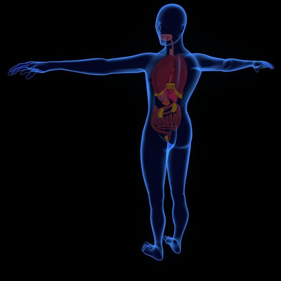 Human Internal Organ Xray royalty-free 3d model - Preview no. 3