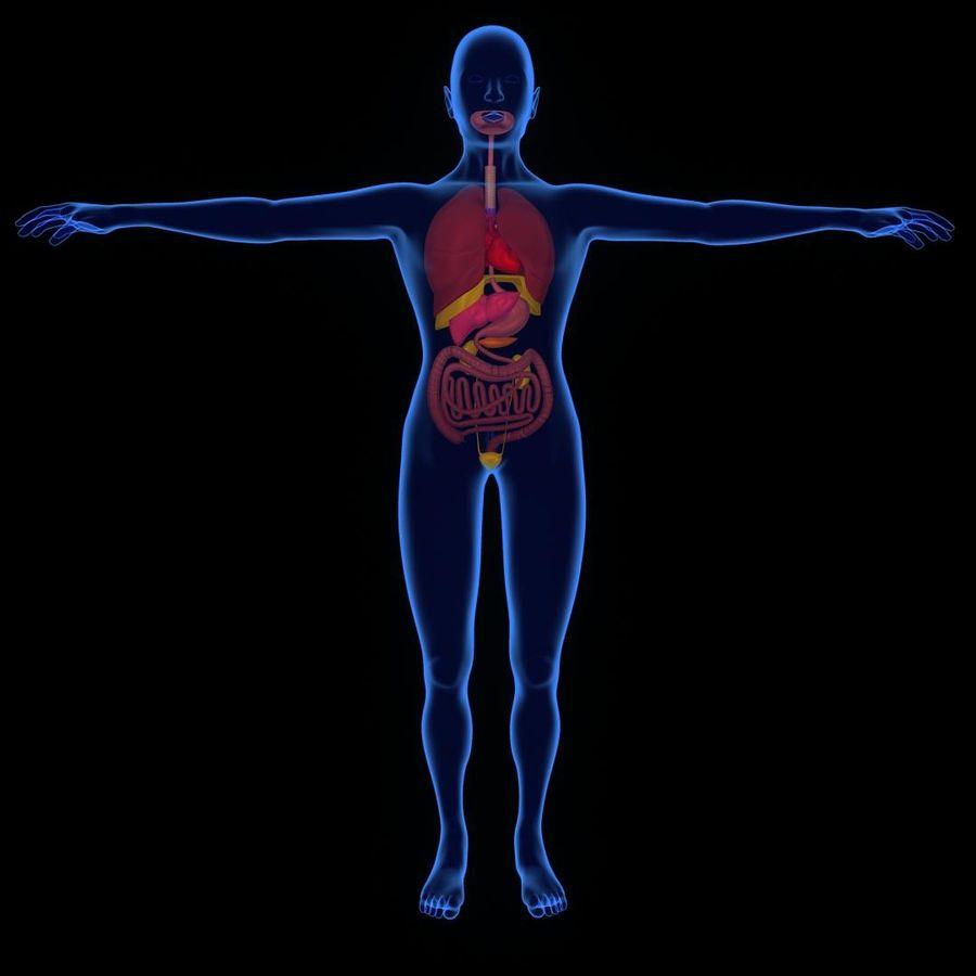 Human Internal Organ Xray royalty-free 3d model - Preview no. 1