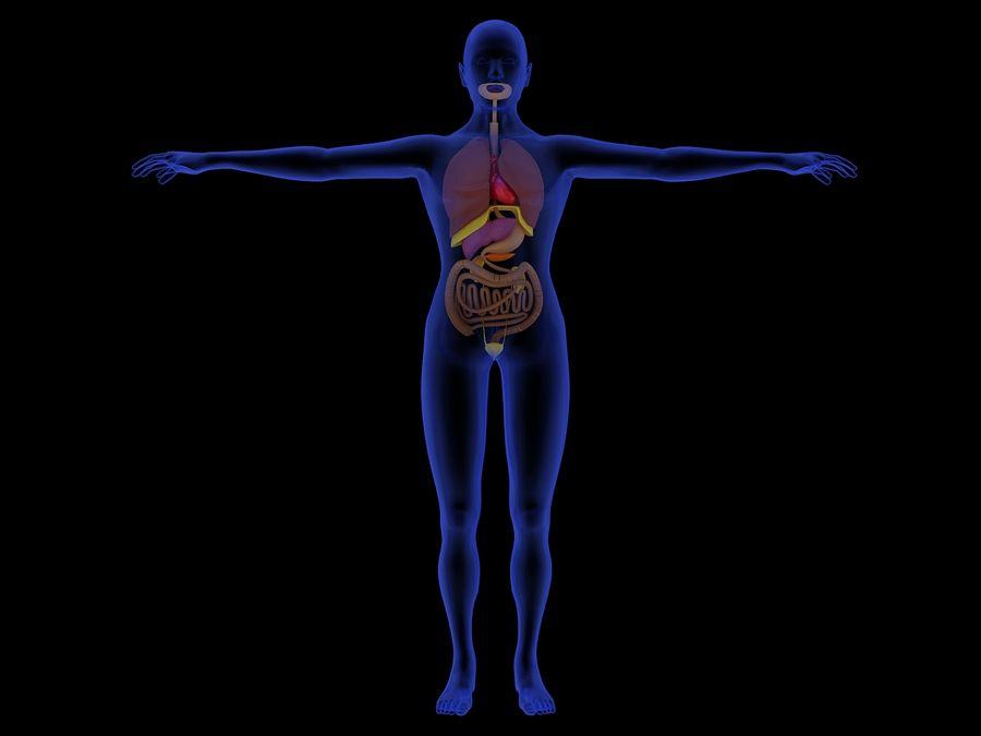 Human Internal Organ Xray royalty-free 3d model - Preview no. 9