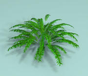 植物フェル 3d model