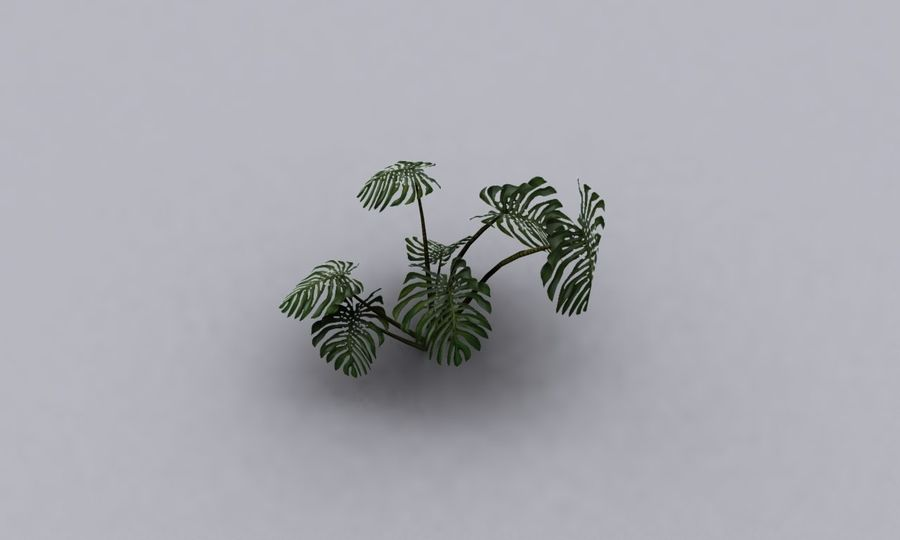 monstera royalty-free 3d model - Preview no. 4