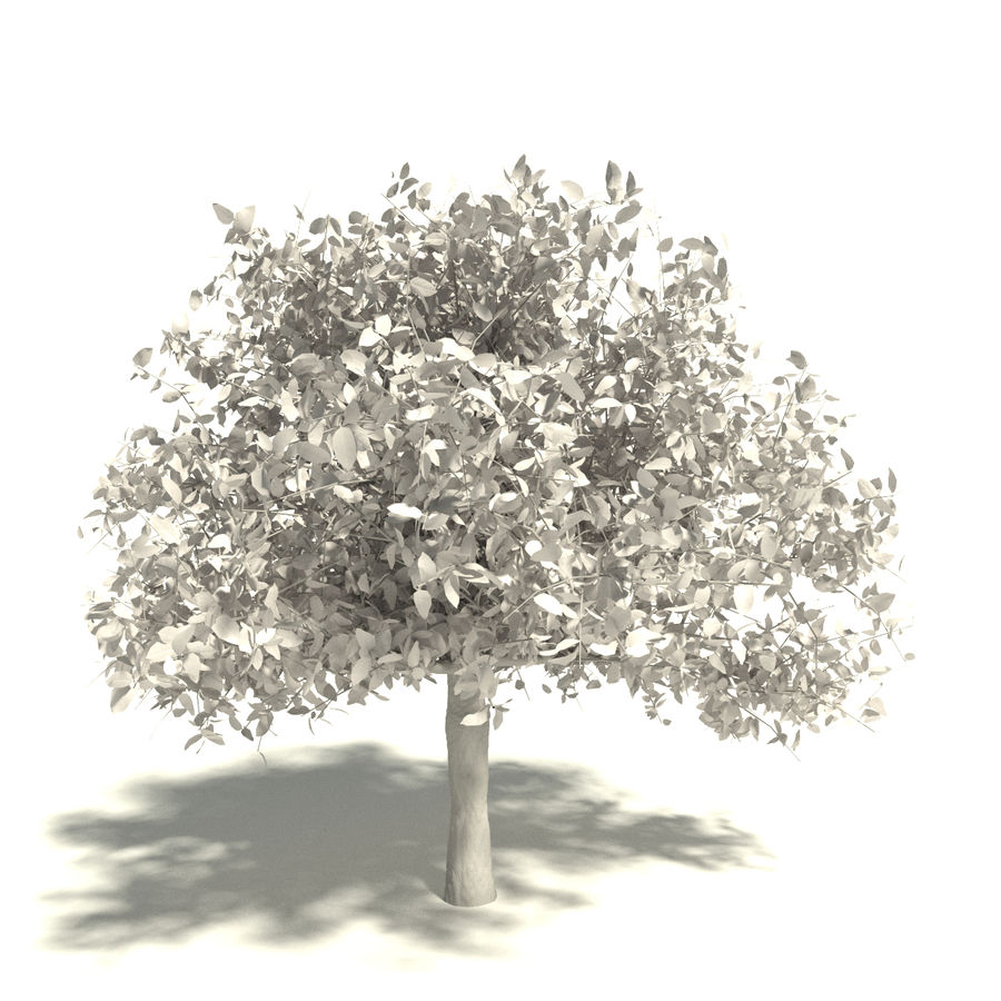 Tree royalty-free 3d model - Preview no. 5
