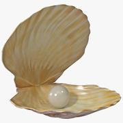 Pearl in Shell 3d model