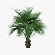 palm_tree04 3d model