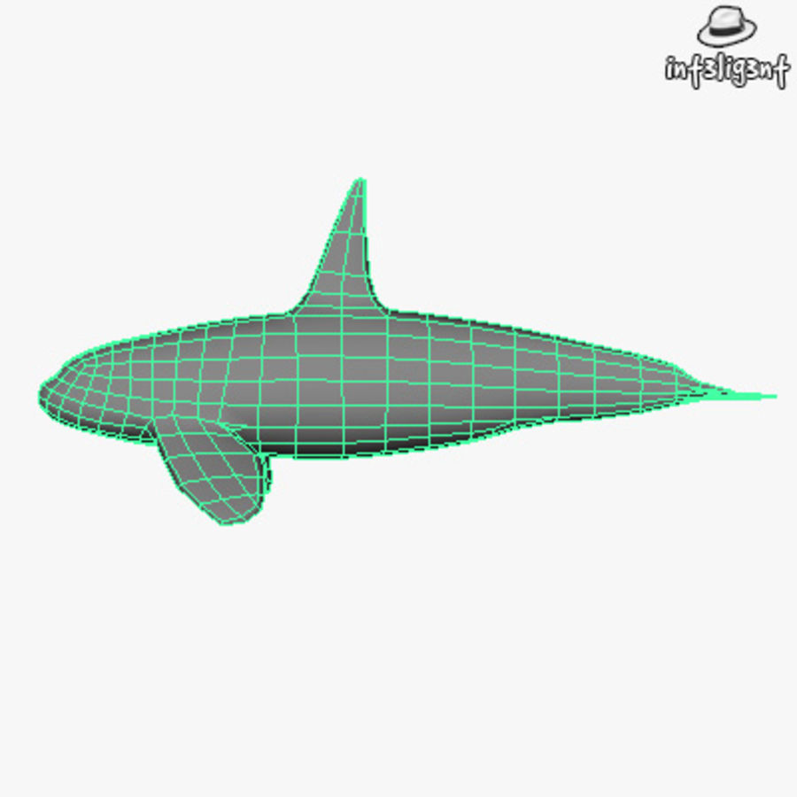 Low Poly Killer Whale royalty-free 3d model - Preview no. 5