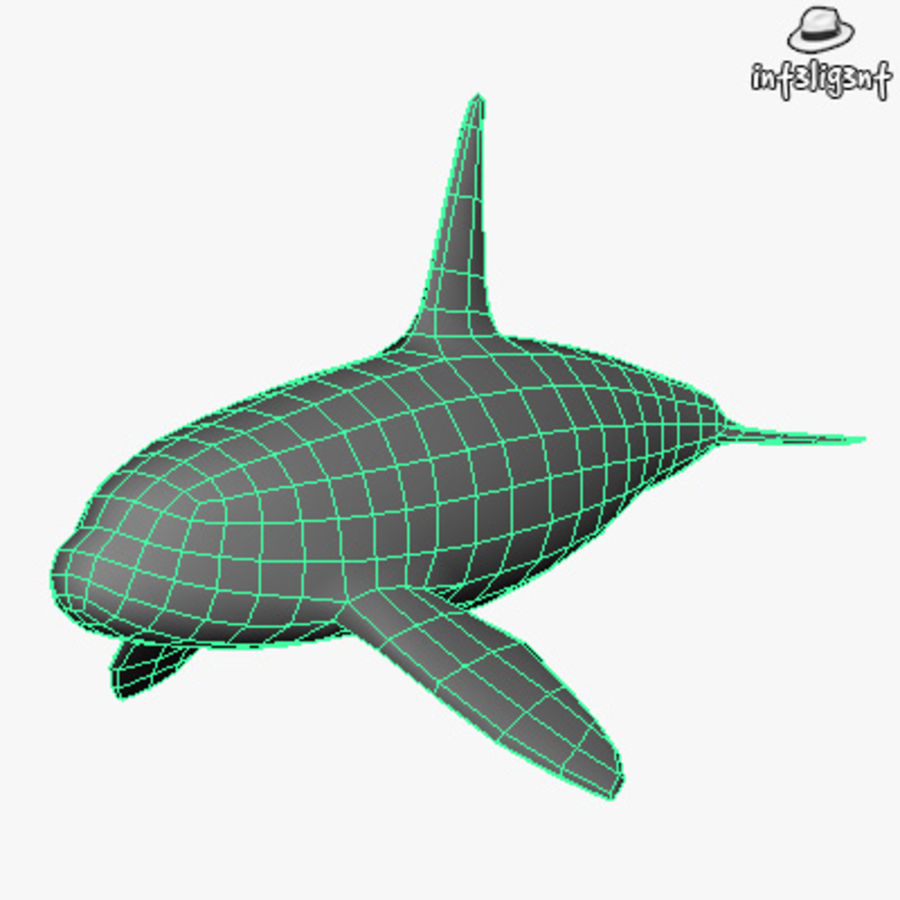 Low Poly Killer Whale royalty-free 3d model - Preview no. 4