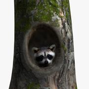 AM Raccoon3 3d model