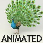 Peacock animated 3d model