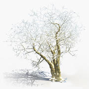 Winter Tree (7) 3d model