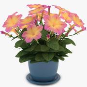 Amarillo petunia modelo 3d