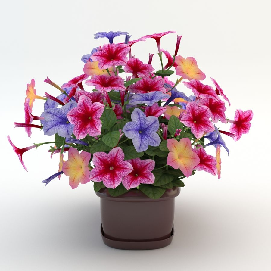 Petunia Colorful royalty-free 3d model - Preview no. 4