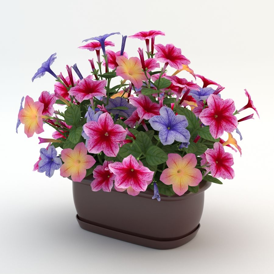 Petunia Colorful royalty-free 3d model - Preview no. 5