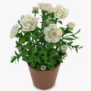 Gardenia Blanc 3d model