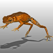 Light Brown Tree Frog 3d model