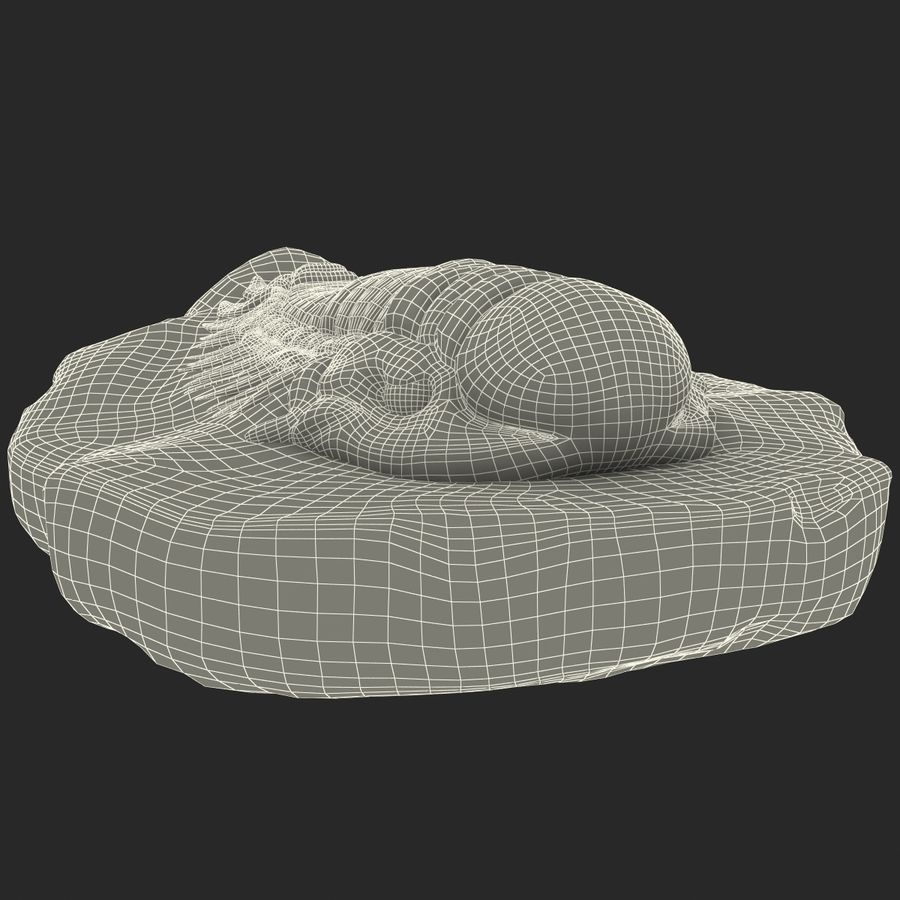 Trilobite Fossil royalty-free 3d model - Preview no. 24