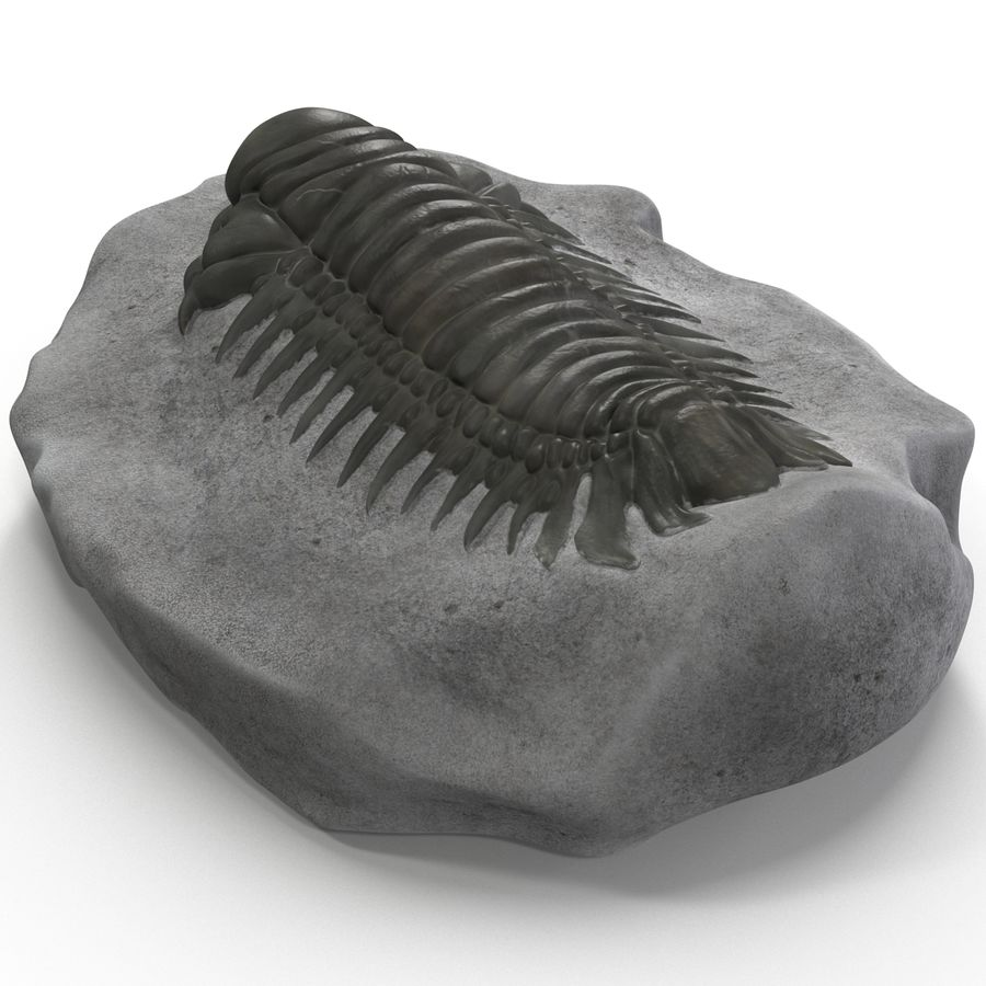 Trilobite Fossil royalty-free 3d model - Preview no. 12