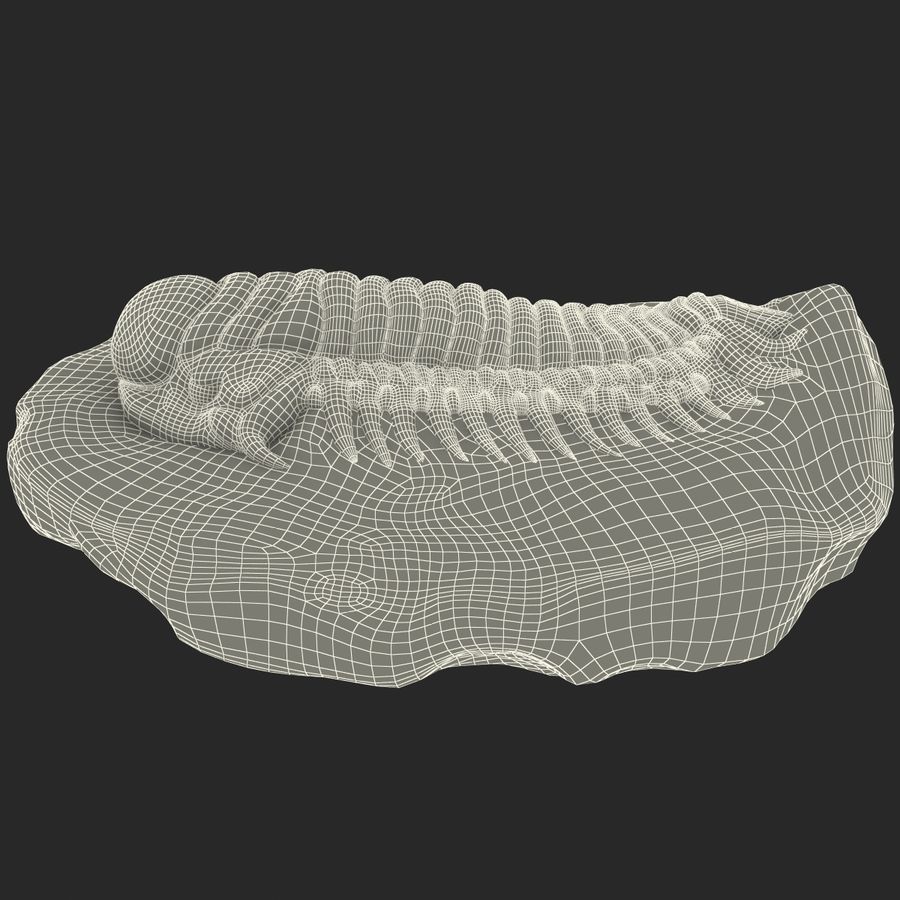 Trilobite Fossil royalty-free 3d model - Preview no. 19