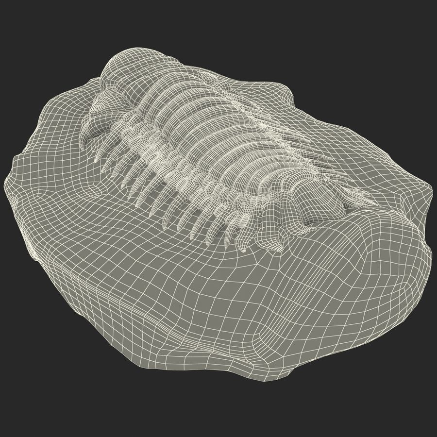 Trilobite Fossil royalty-free 3d model - Preview no. 26