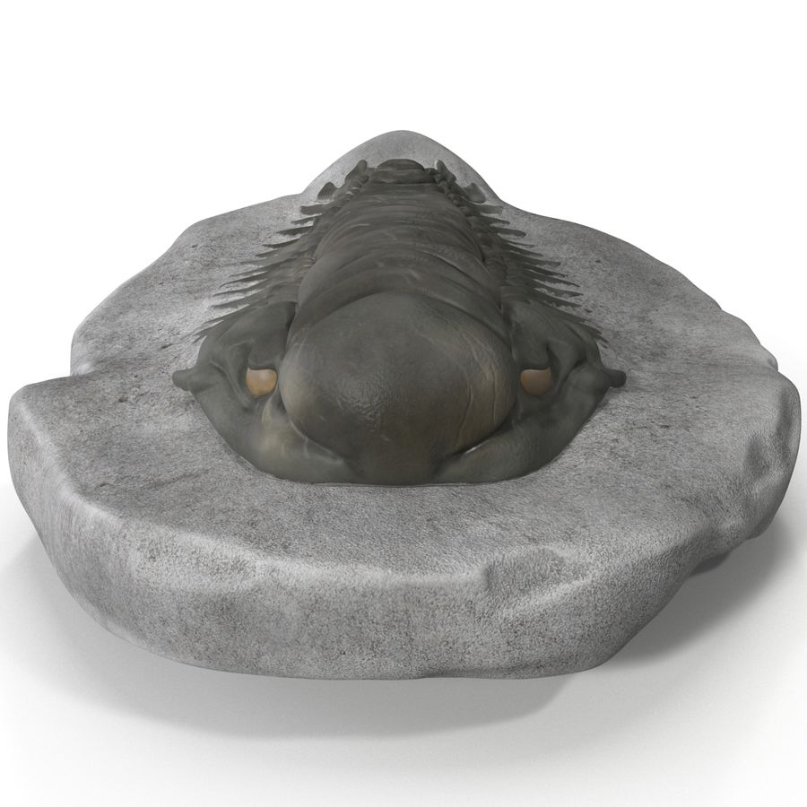 Trilobite Fossil royalty-free 3d model - Preview no. 3