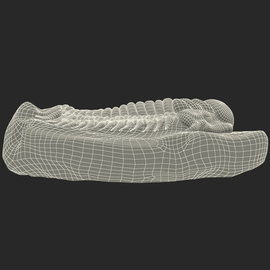 Trilobite Fossil royalty-free 3d model - Preview no. 20