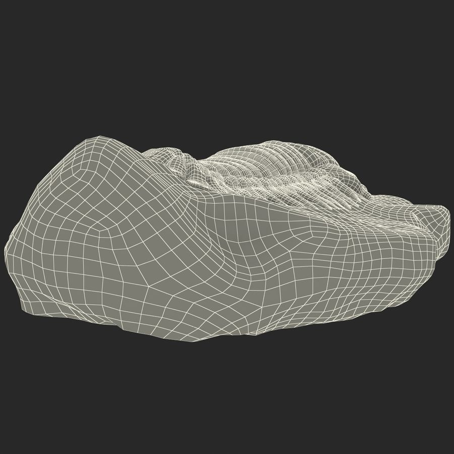 Trilobite Fossil royalty-free 3d model - Preview no. 27