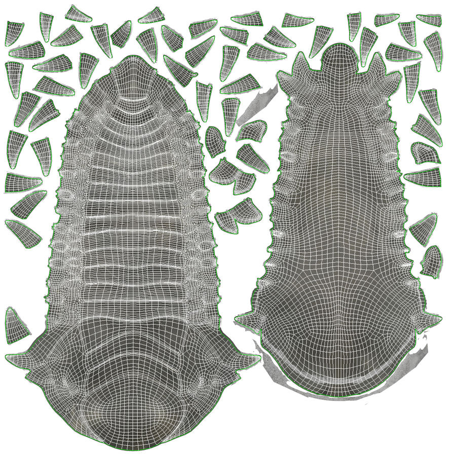Trilobite Fossil royalty-free 3d model - Preview no. 33