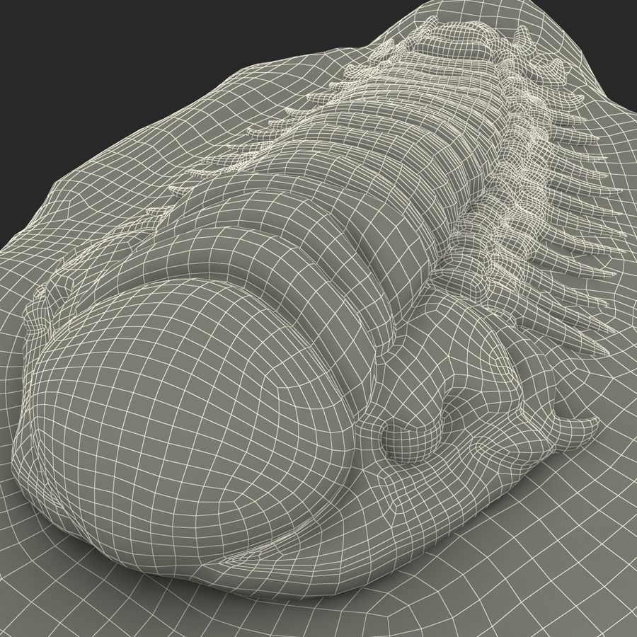 Trilobite Fossil royalty-free 3d model - Preview no. 28