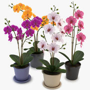 Collection Orchids 3d model