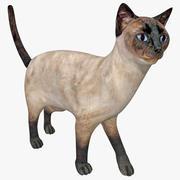 Siamese Cat Pose 5 3d model