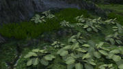 Vild fern-växt - dubbelsidig poly med avancerad inställning av hypershade 3d model