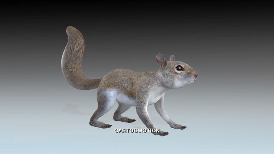 Fox Squirrel royalty-free 3d model - Preview no. 2