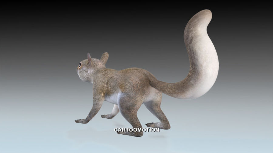 Fox Squirrel royalty-free 3d model - Preview no. 3