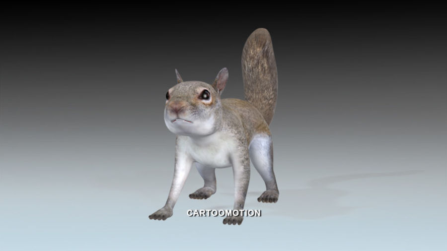 Fox Squirrel royalty-free 3d model - Preview no. 1
