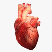 Serce zewnętrzne 3d model